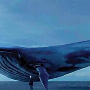 Balena Blu, misteri që fshihet pas 130 vrasjeve në Rusi dhe dhjetëra lëndimeve në mbarë botën