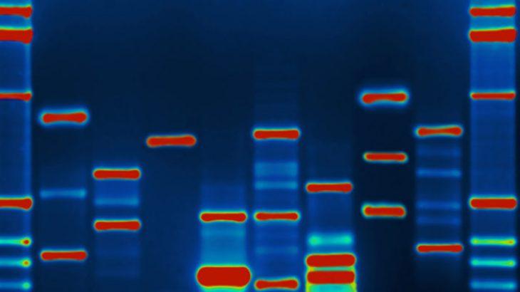 Hulumtuesit injektojnë maluer në një ADN për të hakuar një kompjuter