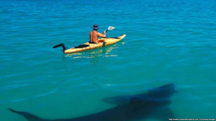 Dronët që diktojnë peshkaqenët