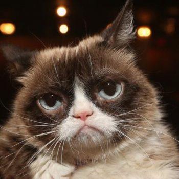 """""""Vdes"""" macja më e famshme e internetit"""