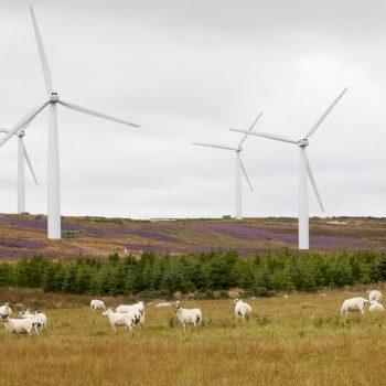 Turbinat e erës në Skoci prodhuan dyfishin e energjisë elektrike që i duhet vendit