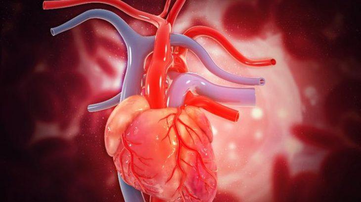 Inteligjenca artificiale mund të identifikojë sulmet në zemër nga një rrahje e vetme e saj