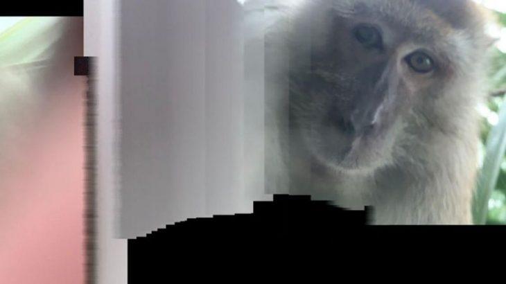 I humbet telefoni, e gjen pas disa ditësh me foto selfie të një majmuni