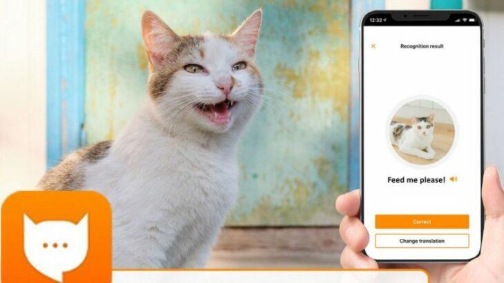 Një aplikacion që përkthen mjaullimën e maceve