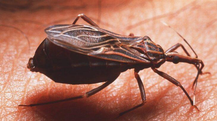 Inteligjenca artificiale vihet në përdorim për parandalimin e sëmundjeve parazitare