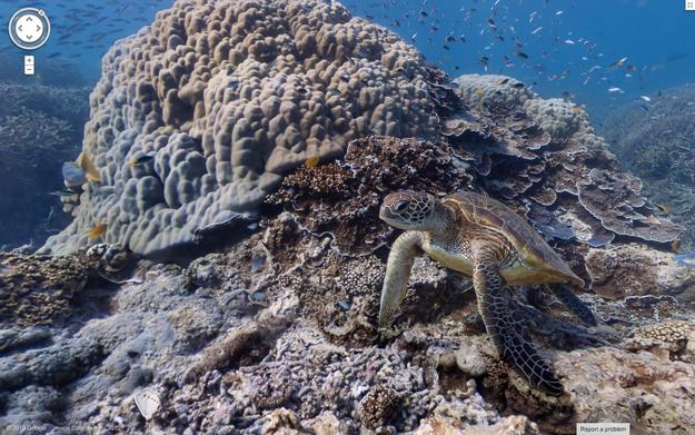 1. Koralet në Australi