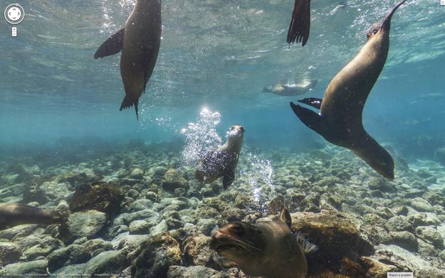 2. Ishujt Galapagos, Ekuador